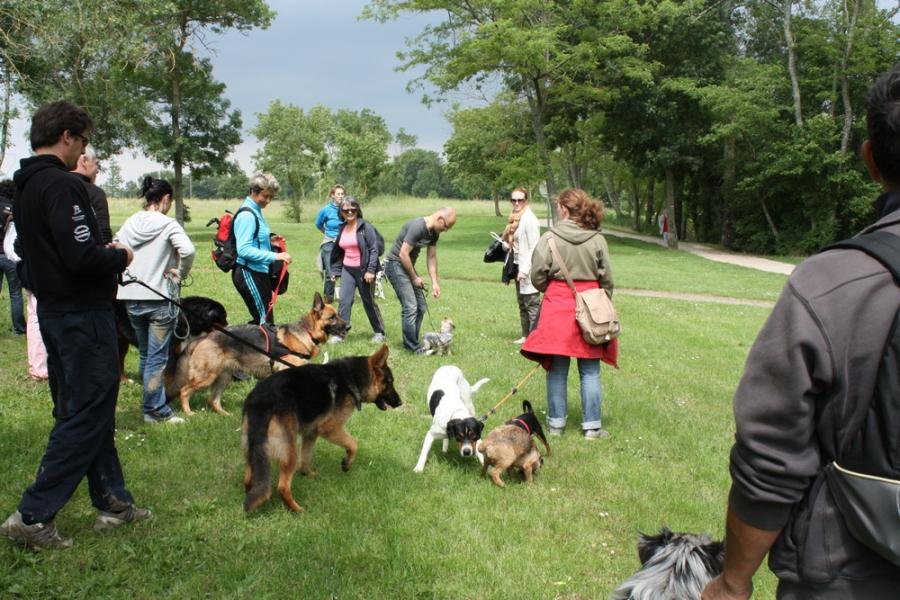 Education et Dressage chien et chiot Toulouse