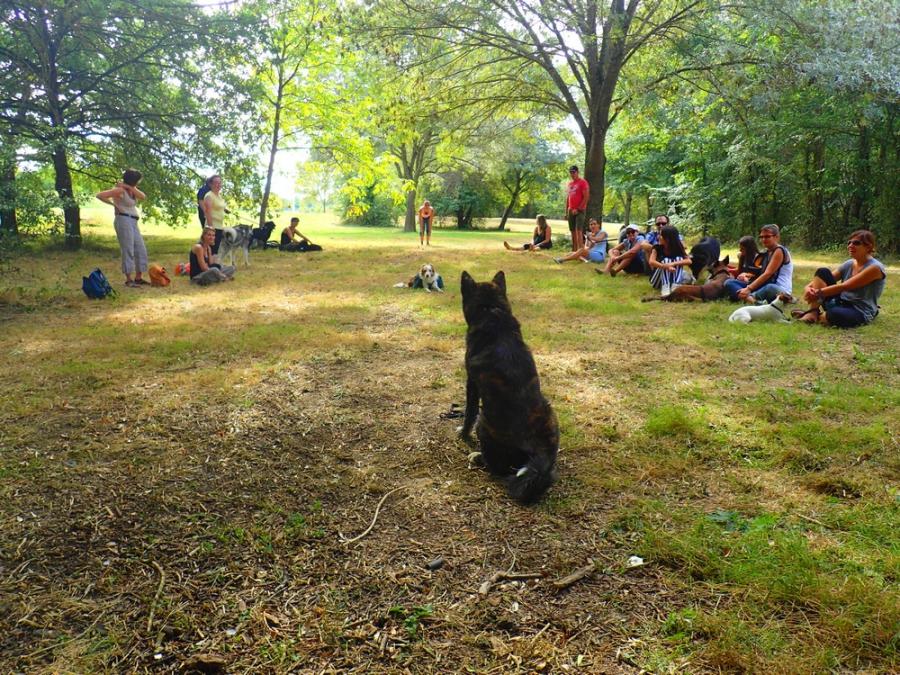 Education canine et dressage chien Toulouse